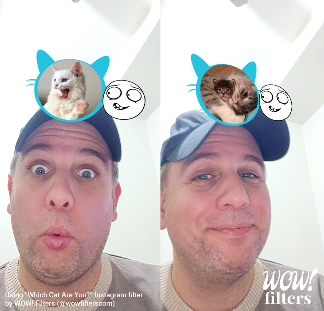 Which cat are you? Instagram filter